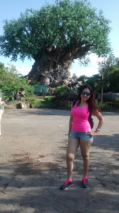 como visitar animal kingdom